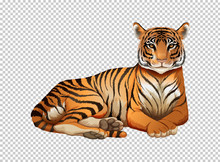 Wild Tiger On Transparent Background