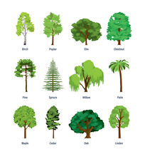 Collection Of Different Kinds Of Trees.