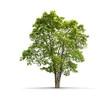 Leinwanddruck Bild - High definition Tree isolated on a white background