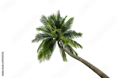 Foto op Canvas Palm boom Coconut tree isolated on white background