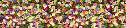 Poster Fleuriste fondo de flore de colores