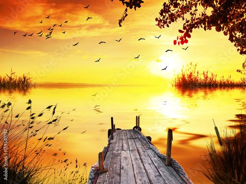 Ingelijste posters Geel embarcadero entre las plantas del lago