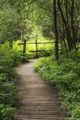 Panel Szklany Optyczne powiększenie Beautiful landscape image of wooden boardwalk through lush green English countryside forest in Spring