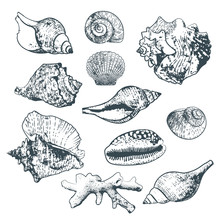 Set Of Vector Isolated Hand Drawn Seashells And Coral. Sketch Style Outline Shells. Summer Design Elements.