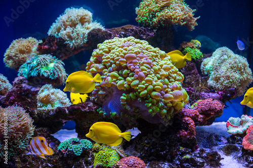 In de dag Onder water Tropical fish butterfly and corals. Beautiful background of the underwater world