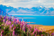 Landscape View Of Lake Tekapo, Flowers And Mountains, New Zealand