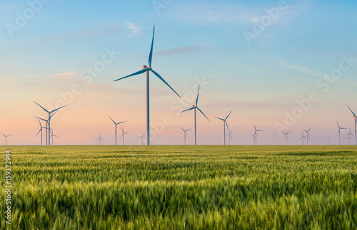 Obraz Group of windmills for electric power production in the green field of wheat - fototapety do salonu