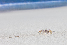 Crab On Beach With White Sand ...
