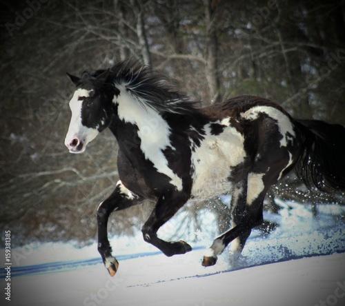 Photo  cavalry
