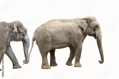 Fotobehang Olifant Two big elephants isolated on white background