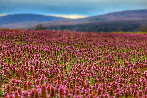 Foto op Canvas Crimson landscape