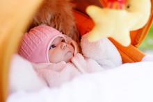 Portrait Of Newborn Baby Girl In Warm Winter Clothes In Pram.