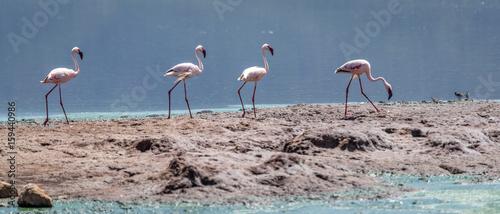 Foto op Aluminium Flamingo Flamingos in Lake Bogoria, East Africa, Kenya