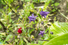 Wild Flowers Photographed In N...