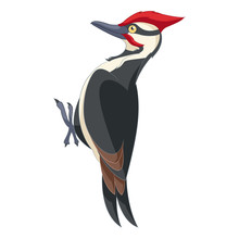 Cartoon Smiling Woodpecker