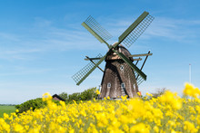 Historische Mühle In Einem Blühenden Gelben Rapsfeld, Jütland, Dänemark