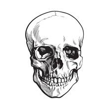 Hand Drawn Human Skull, Anatom...