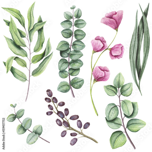 Foto  Botanical Set of Watercolor Herbs and Flowers