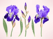 Iris Vector Set