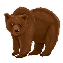 Vector Illustration Brown Bear