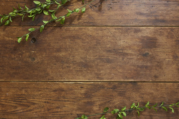 Tree branch on rustic wood background