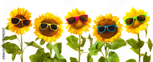 Fototapeta Sunflowers with sunglasses