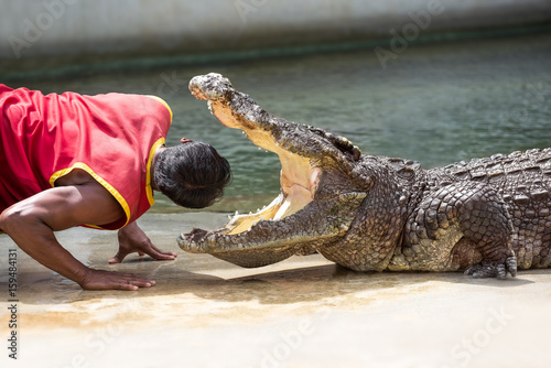 Cadres-photo bureau Crocodile Crocodile show