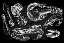 Seafood Hand Drawn Collection