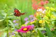 Leinwandbild Motiv Schmetterling 357