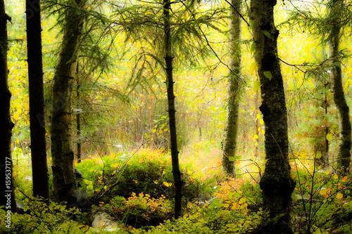 Fototapeten Wald wood