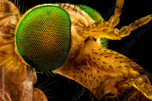 Extreme macro - portrait of a green eyed crane fly, magnified through a microscope objective (width of the frame is 2.2mm)