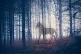 Mystical horse in the fantasy dark fairy foggy forest landscape. Abstract unicorn in the magical woodland. Double exposure technique used. - 159542795