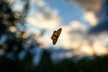Night Butterfly On A Windowpane