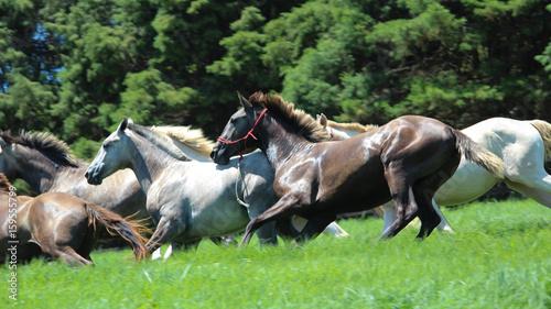 Fotografie, Obraz cavalry