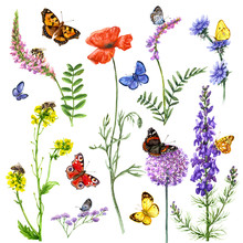 Watercolor Flowers And Insects
