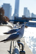 Seagulls on Railing by Hudson River