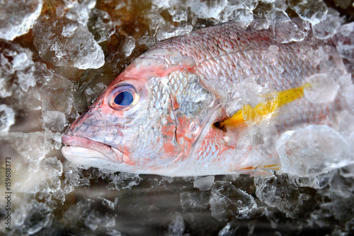 Fotobehang Red snapper fish from fishery market.