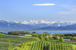Obstbau-Landschaft am Bodensee mit Blick auf den See und die verschneite Alpenkette