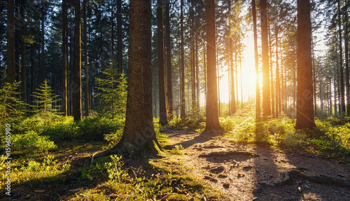 Poster Marron chocolat Hiking Path in to the Forest at sunset
