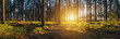 Leinwanddruck Bild - Wald mit bei Sonnenuntergang panorama