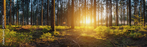 Printed kitchen splashbacks Forest Wald mit bei Sonnenuntergang panorama