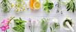 canvas print picture - Fresh herbs