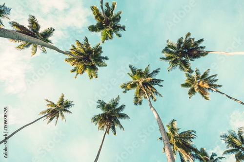 Cadres-photo bureau Palmier Coconut palm tree on sky background. Low Angle View. Toned image