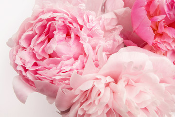 Obraz na SzkleBeautiful pink Peonie flower on light background