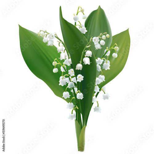 convallaria-majalis-lilly-of-the-valley-hand
