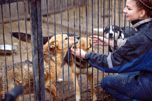 Foto  Girl volunteer in the nursery for dogs. Shelter for stray dogs.