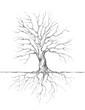 Leinwanddruck Bild - Baum mit Wurzeln