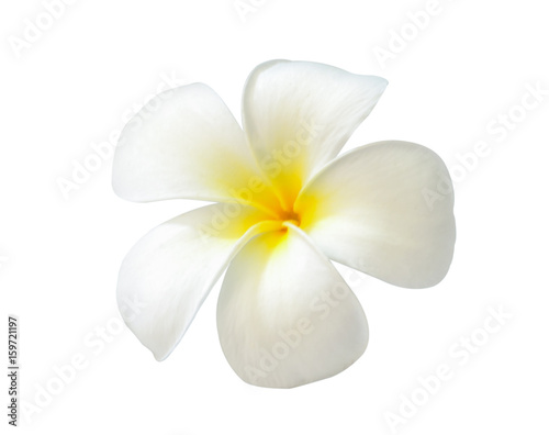 La pose en embrasure Frangipanni Plumeria on white background
