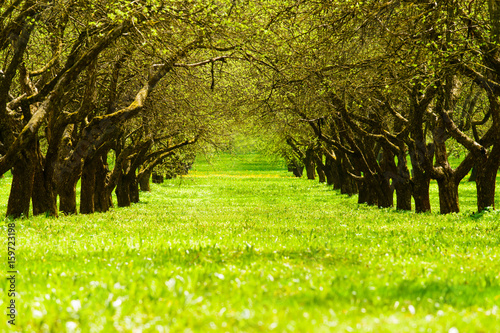 Poster Lime groen landscape view of field and trees