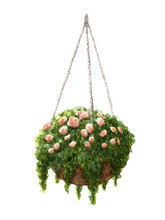 Hand Painted Watercolor Roses In The Hanging Pot Isolated On The White Background